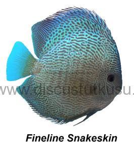 DMG Fineline snakeskin