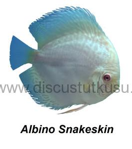 DMG albino snakeskin