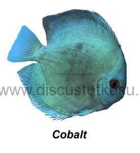 DMG cobalt