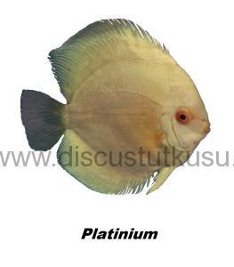 DMG platinium